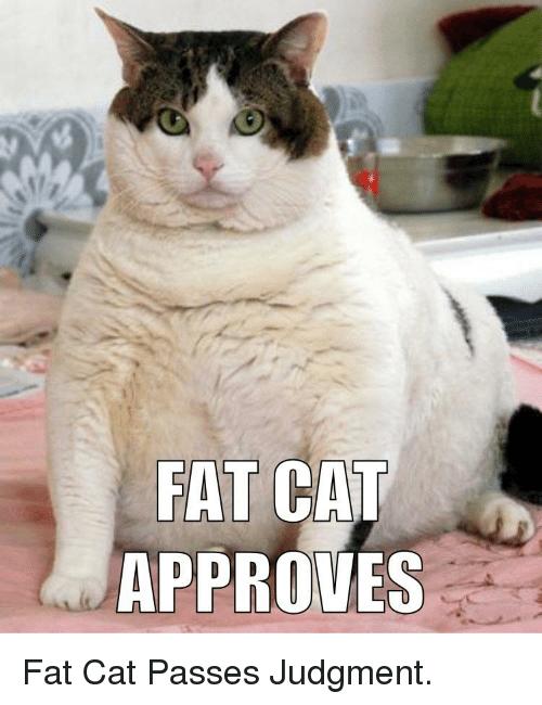 fat-cat-approves-fat-cat-passes-judgment-39182605.png