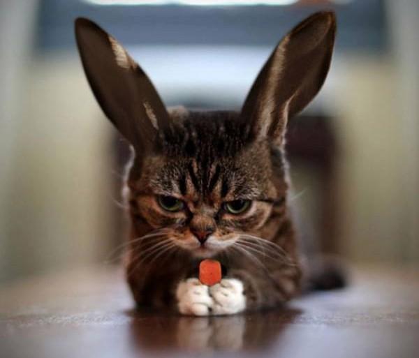 Rabbit-Panda-And-Cat-1-e1453726262224.jpg