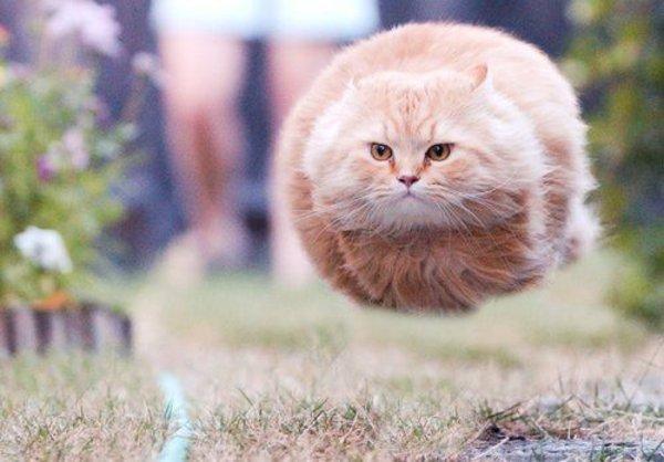 bullet_cat.jpg