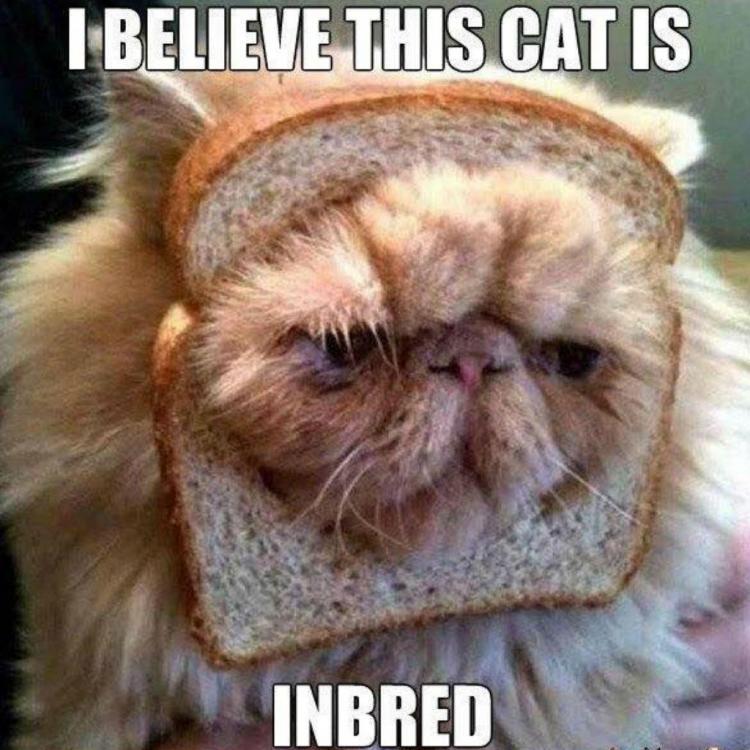 cat-meme-83.thumb.jpg.01db0ac77350daec83e52f9991f9ce32.jpg