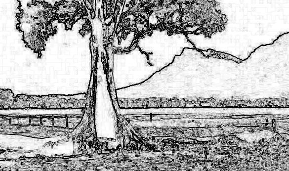 cazneaux_tree_edge.jpg.abeb42f7063ebc200cbdd978f1a25a8c.jpg