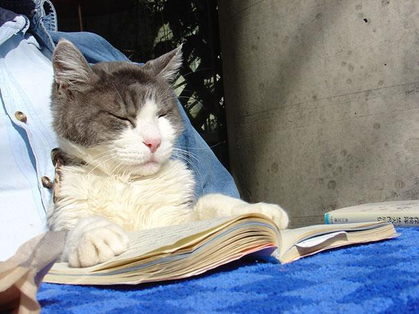 animals-dont-let-you-read-24__605.jpg