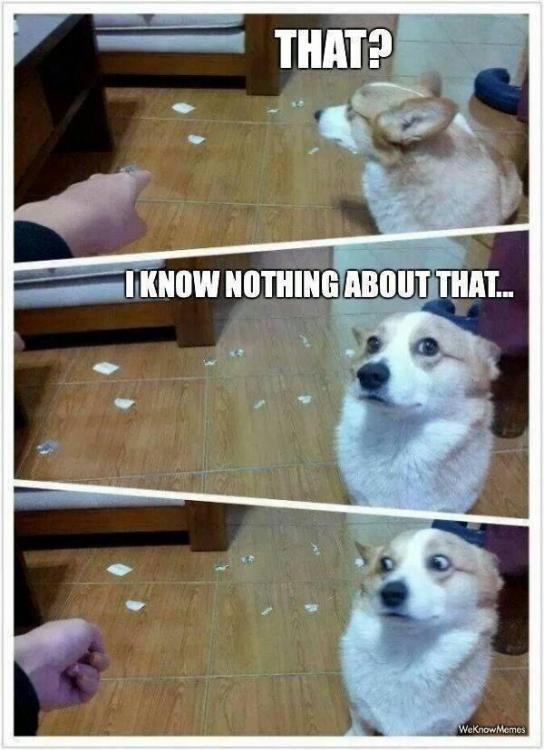 funny-dog-meme-600x828.jpg