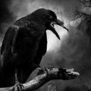Raven667