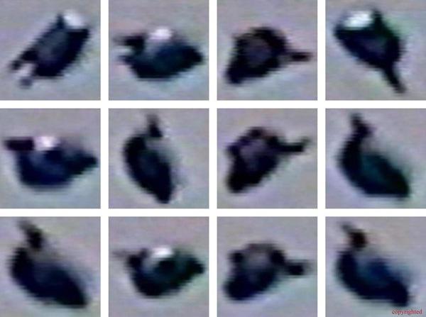 post-11904-1114052752.jpg