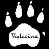 Thylacina