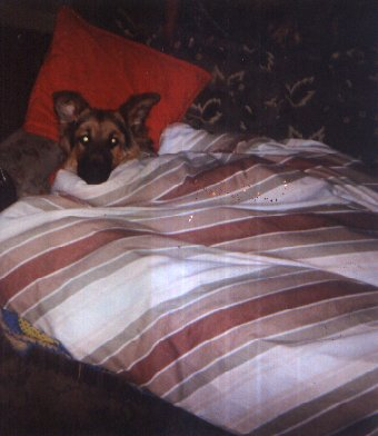 My guard dog ben