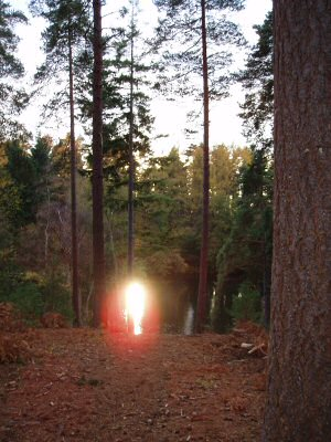 Glow in the woods