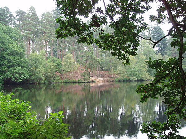 Forest reflections 1
