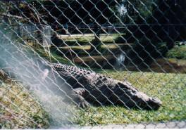 Croc ghost