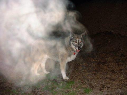 Dog and mist photograph