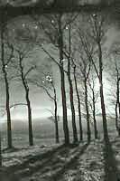 Orbs in trees