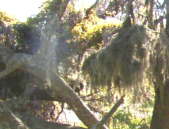 Ghost of young woman in a tree (2)