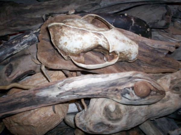 Skull & Driftwood