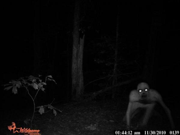 Creature in the woods (full)