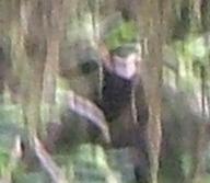 Ketchikan Ape zoomed in