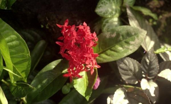 Flower Found in Bali, Indonesia