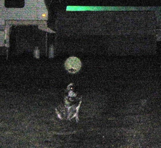 My Dog Bandit With Orb Above Head