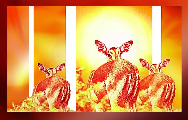 Sun Impalas