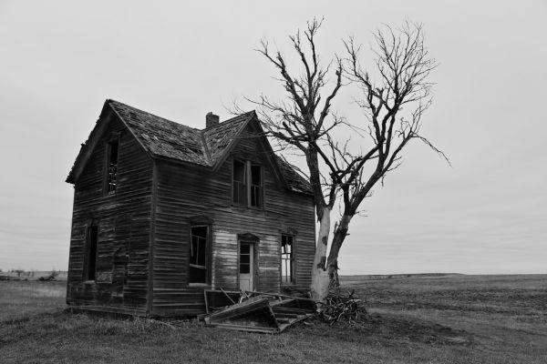Abandoned Farmstead 02