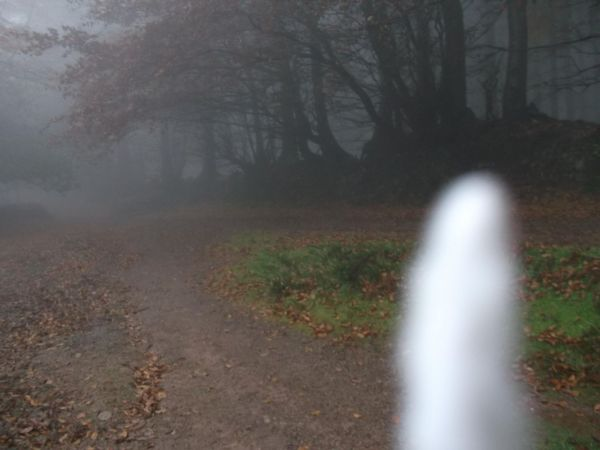 Spook In Triscombe Woods   16.11.12