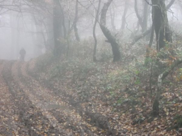 Apparition In Triscombe Woods   16.11.12
