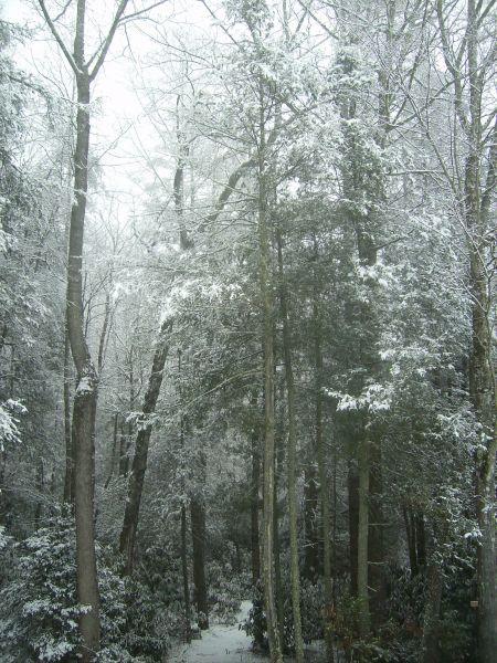 Recent Snow