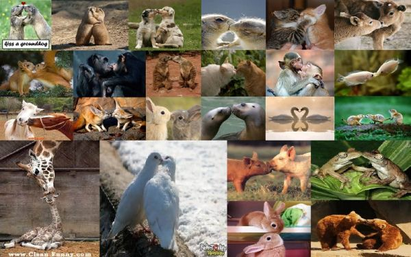 Animal kisses collage