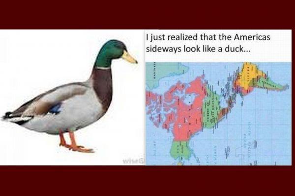 Duck duck Americas