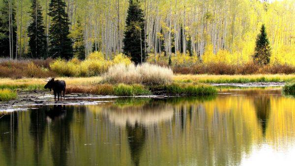 2012 09 28 Big Cottonwood Canyon 521