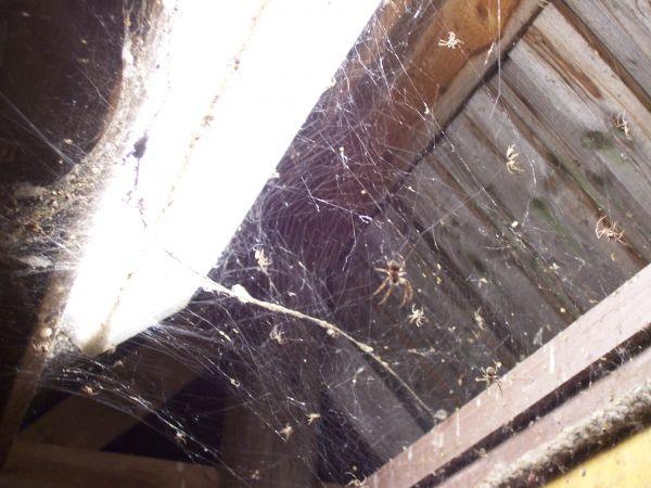 Spidertown!
