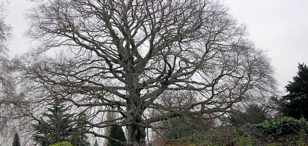 Mystery surrounds poisoned trees in Norfolk - Unexplained Mysteries