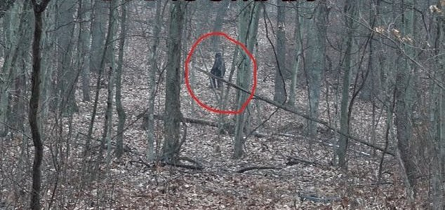 Two men film alleged 'Bigfoot' in Ohio woodland News-bigfoot-ohio-grassman