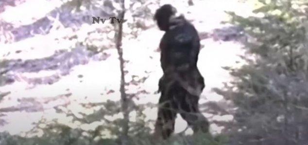 Muscular 'Bigfoot' caught on camera in Idaho