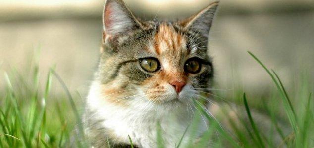 Schrodinger's cat can be saved after all News-cat-grass