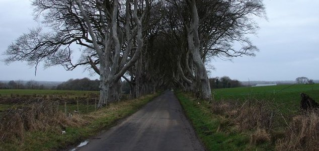 A third of Londoners have seen a 'road ghost' News-dark-hedges