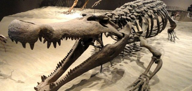'Terror crocodile' had teeth the size of bananas News-deinosuchus