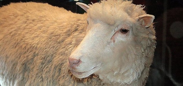 Dolly the sheep had no health abnormalities - Unexplained Mysteries