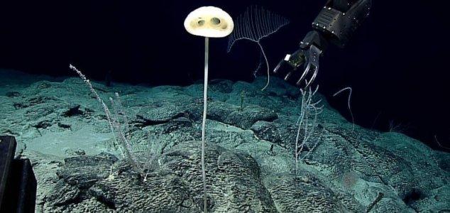 'Alien-like' life form discovered on sea floor News-et-sponge
