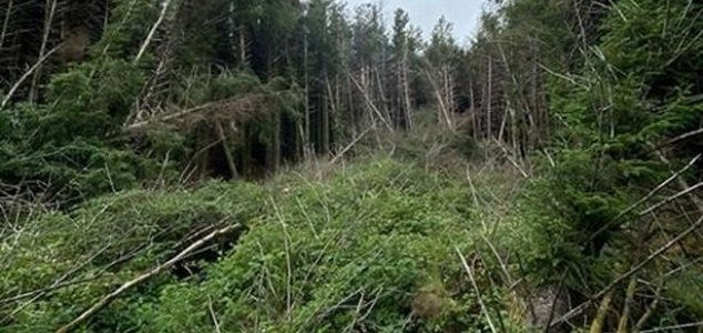 Man discovers 'UFO crash site' in the woods News-forest-crash-site