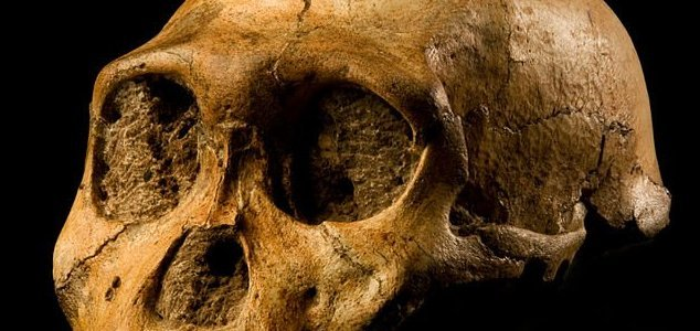 Did we kill all the other species of human ? News-homo-fossil