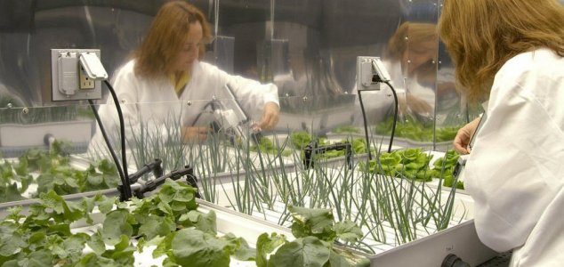 Image result for Growing food in space