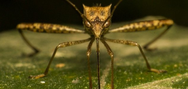 Release of 750M GM mosquitoes gets approval News-mosquito-face