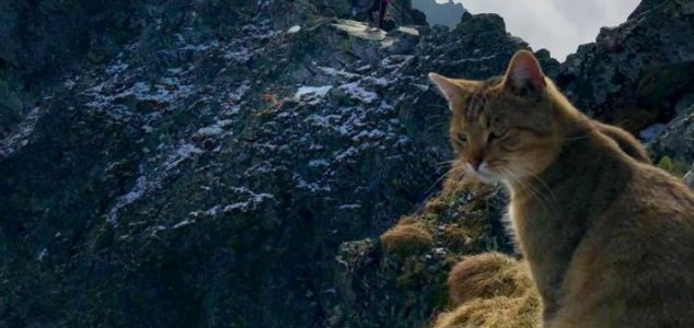 Climber finds cat on top of 8,000ft mountain News-mountain-cat