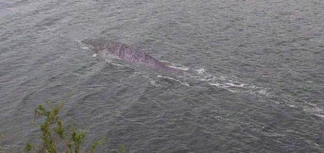 New Loch Ness Monster photographs emerge News-nessie-sept-19