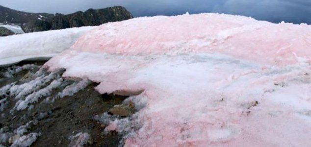 The snow on the Italian Alps is turning pink News-pink-snow