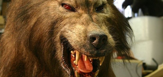 Spate of 'werewolf' sightings reported in Mexico News-werewolf