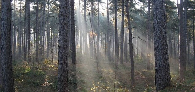 Hiking scientist discovers bizarre new microbes  News-woods-2