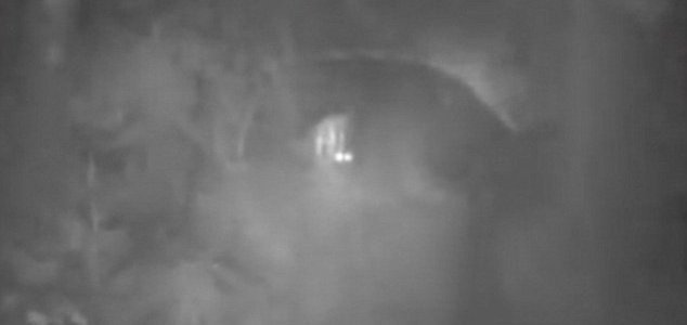 Australian team captures 'Yowie' footage - Unexplained Mysteries