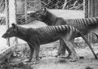 Image credit: Hobart Zoo
